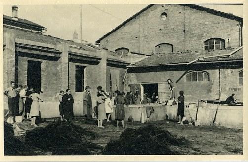 ginestra012.jpg